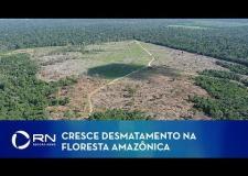Desmatamento na Amazônia atinge maior nível em 11 anos