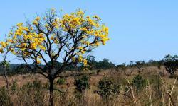 De 2000 a 2018, Brasil perdeu 7,6% de suas florestas diz IBGE