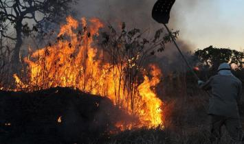 Incêndios florestais no sul da Europa e nos EUA chamam a atenção para novas tecnologias preventivas