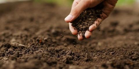Análise de solo: a importância de fazer antes de plantar
