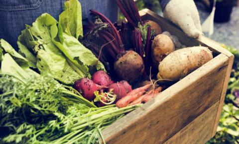Produtos orgânicos oferecem maior garantia para o consumidor quando se trata de saúde e origem do que está sendo consumido