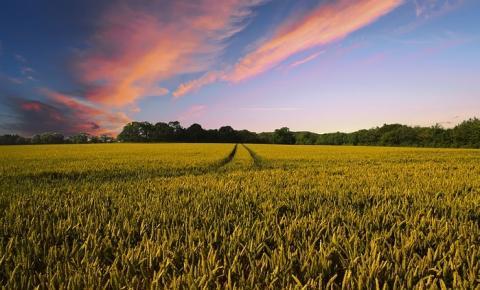 Agricultura: como fazer o adequado manejo das culturas