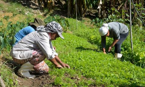 Áreas agrícolas atingidas em Mariana apostam em diversificar produção