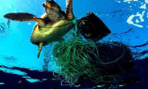 Animais marinhos sofrem com a má gestão no descarte de resíduos