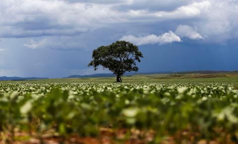 Tecnologia e ciência devem pautar agricultura, diz ex-ministro