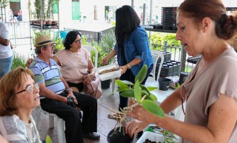 Cultivo de orquídeas é tema de workshop desta sexta no Festival das Flores
