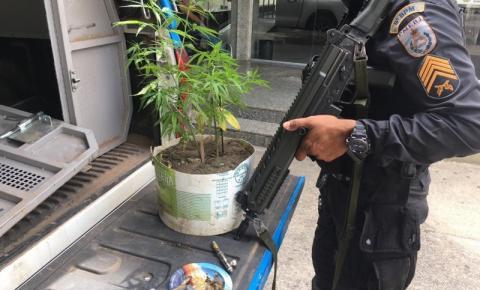 Polícia apreende pés de maconha em apartamento no IPS