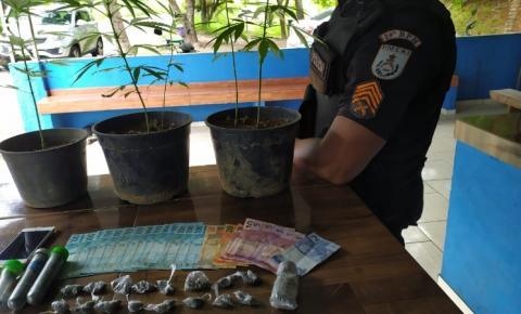 Cinco pés de maconha são apreendidos pela polícia em Itaperuna