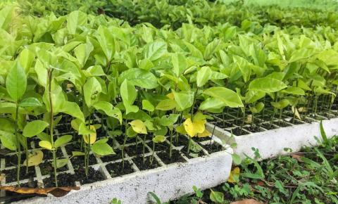 Chuva regular no início de ano beneficia agricultura em Campos