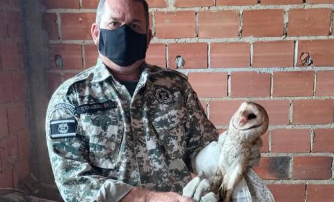 GAM de Campos resgata e devolve à natureza três animais silvestres em uma semana