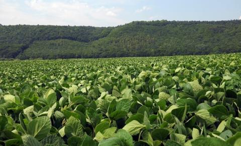 Bayer e ABRASS promovem semana de treinamentos sobre as inovações em soja para o Brasil