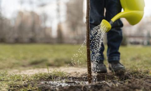Projeto prevê plantio de mil árvores
