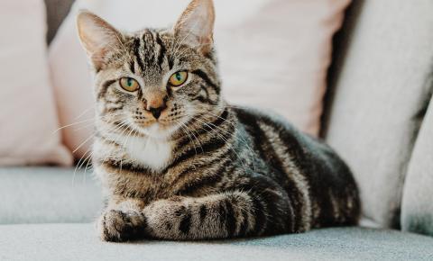 Conheça três importantes hábitos que trazem mais saúde para a vida do seu gato