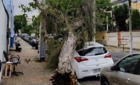 Vendaval deixa parte de Campos sem energia, arranca árvores e provoca poeira na cidade